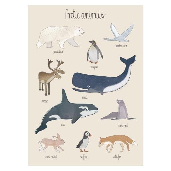 Sebra Plakat Arctic